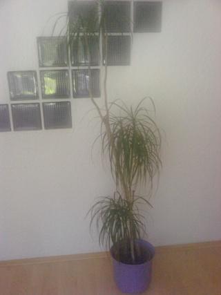 Motiv fotografiranja: Biljke, Cvijeće, Cvijet, Drveće... 12100418