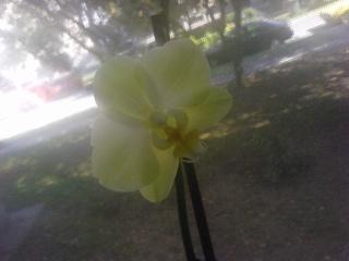 Motiv fotografiranja: Biljke, Cvijeće, Cvijet, Drveće... 12100423