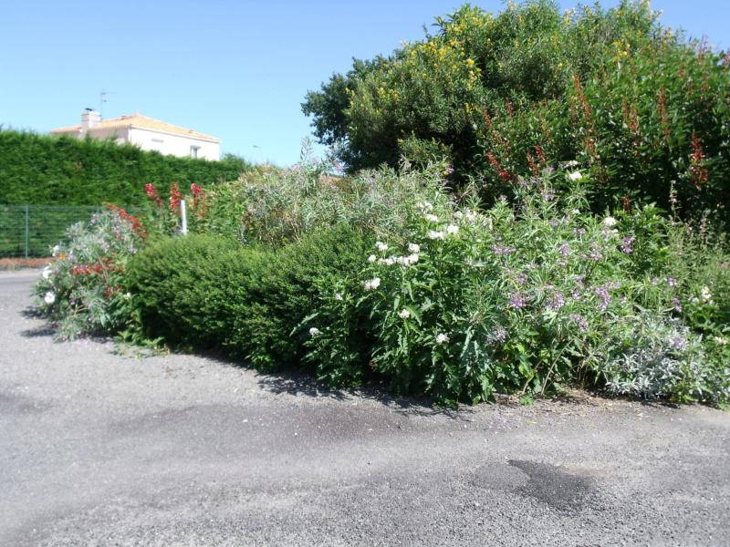 Anselme - Le jardin d'Anselme (44) - Page 9 Dscf2610