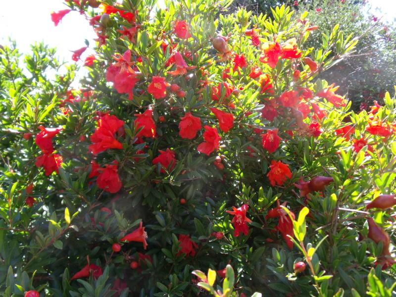 Anselme - Le jardin d'Anselme (44) - Page 4 Fleurs11