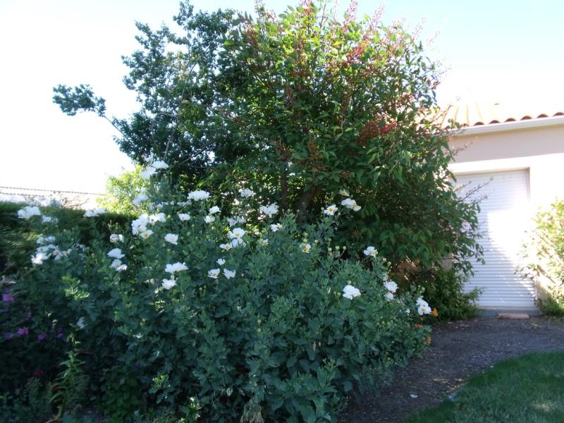 Anselme - Le jardin d'Anselme (44) - Page 3 Romney10