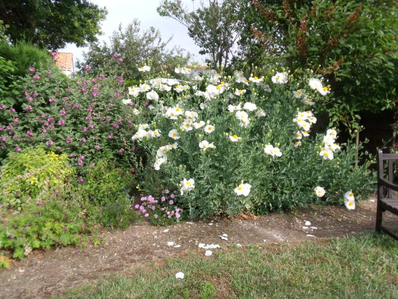 Anselme - Le jardin d'Anselme (44) - Page 4 Romney12