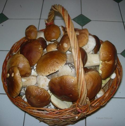 [Cueillette/culture] Les champignons Panier10