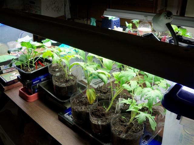 Grow Lights 05-06-11