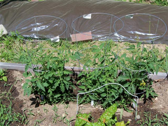 Hoop house question.. 05-28-11