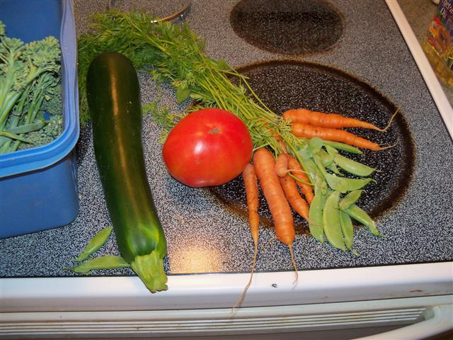 My first carrots picked today, July 19th. 07-19-11