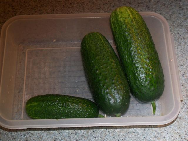 My first cukes.... 07-26-10