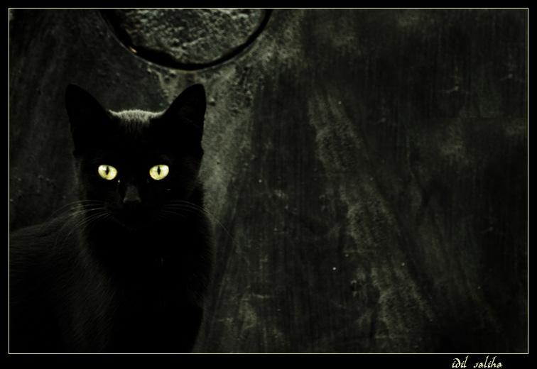 ♣. Petit Astre Black_10