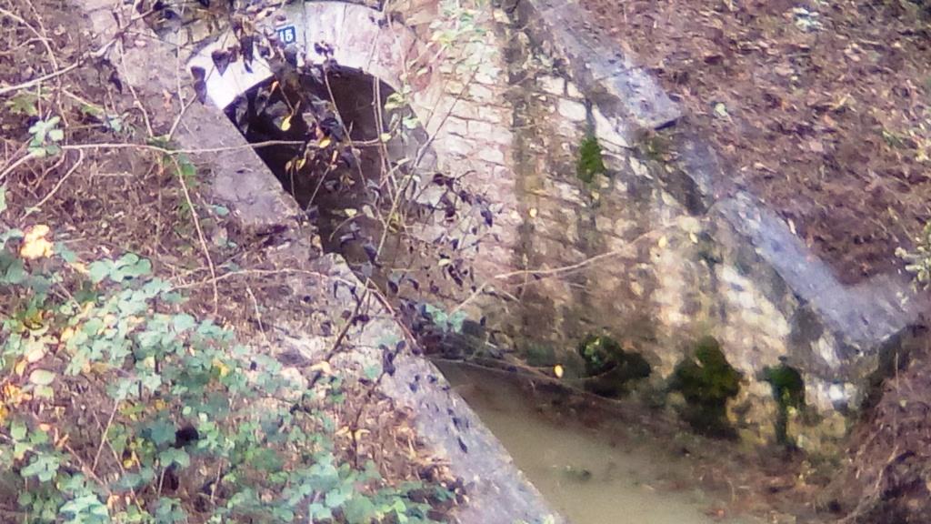Opération Bridge Shepherd Img_2119