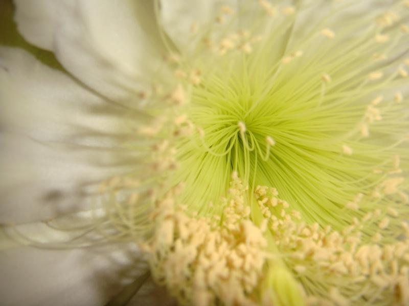 Quelque fleurs des vacances :) Dsc00952