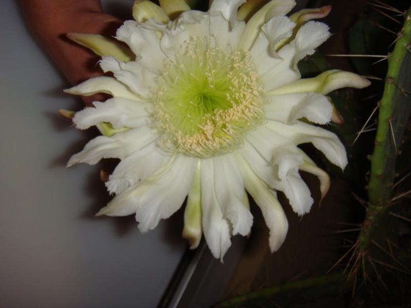 Quelque fleurs des vacances :) Dsc00953