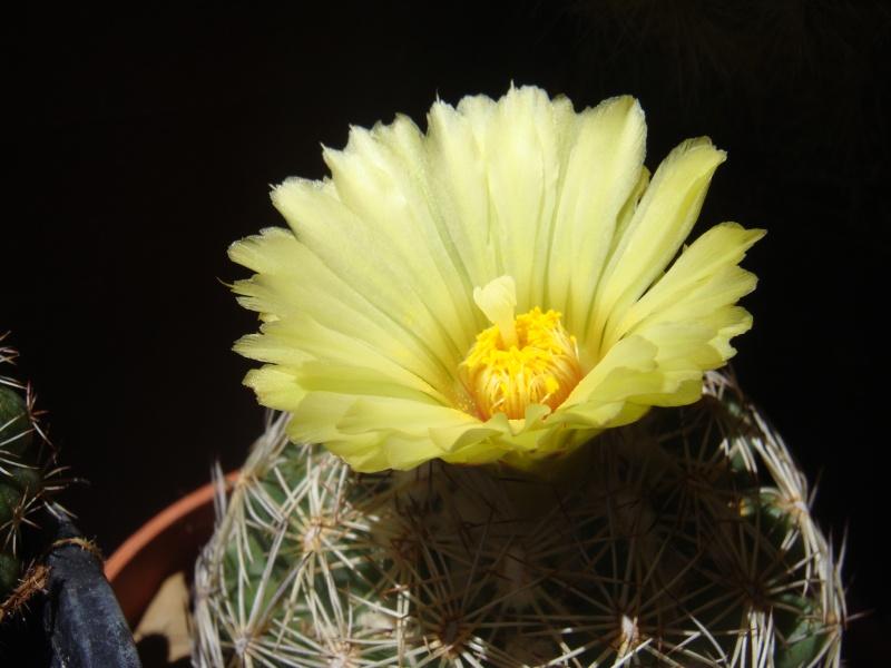 Quelque fleurs des vacances :) Dsc00954