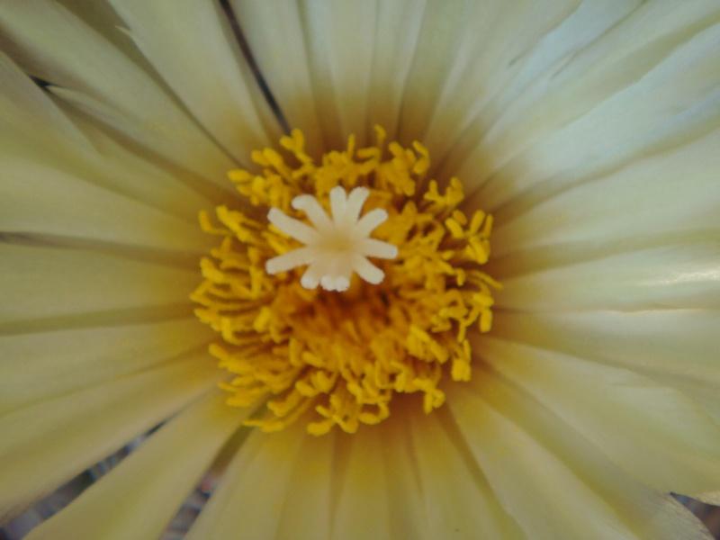 Quelque fleurs des vacances :) Dsc01011