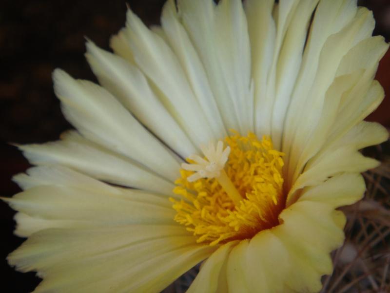 Quelque fleurs des vacances :) Dsc01012