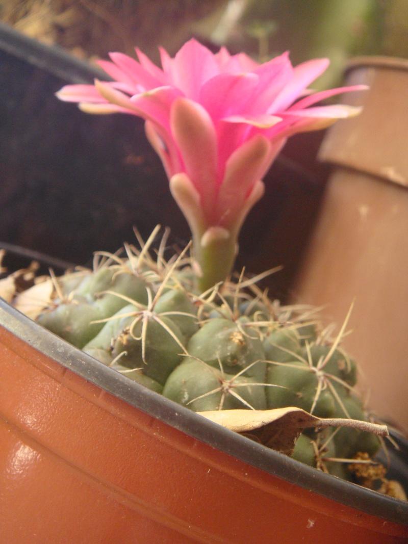 Quelque fleurs des vacances :) Dsc01013