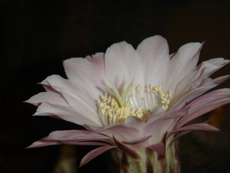 Quelque fleurs des vacances :) Dsc01015