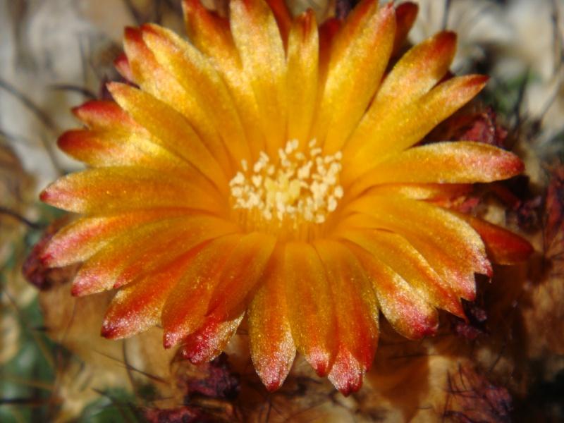 Quelque fleurs des vacances :) Dsc01016