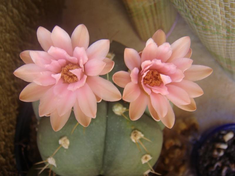 Quelque fleurs des vacances :) Dsc01110