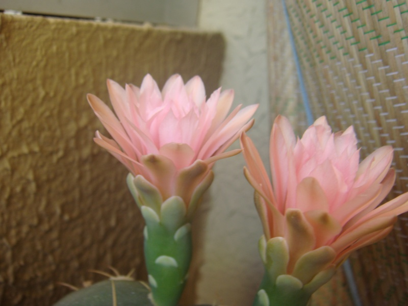 Quelque fleurs des vacances :) Dsc01111