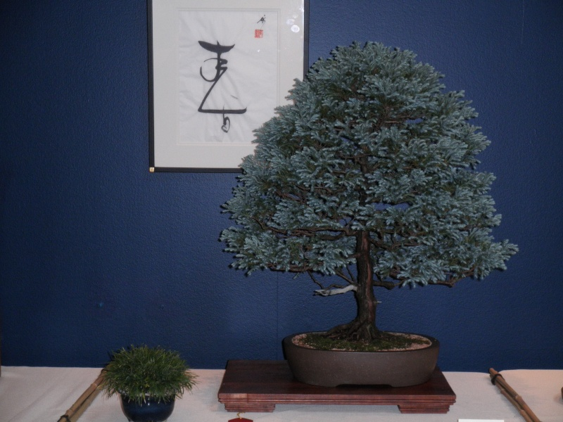 Mid America Bonsai Show @ the Chicago Botanical Gardens... P8180066