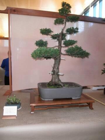 Prairie State Bonsai Society Show