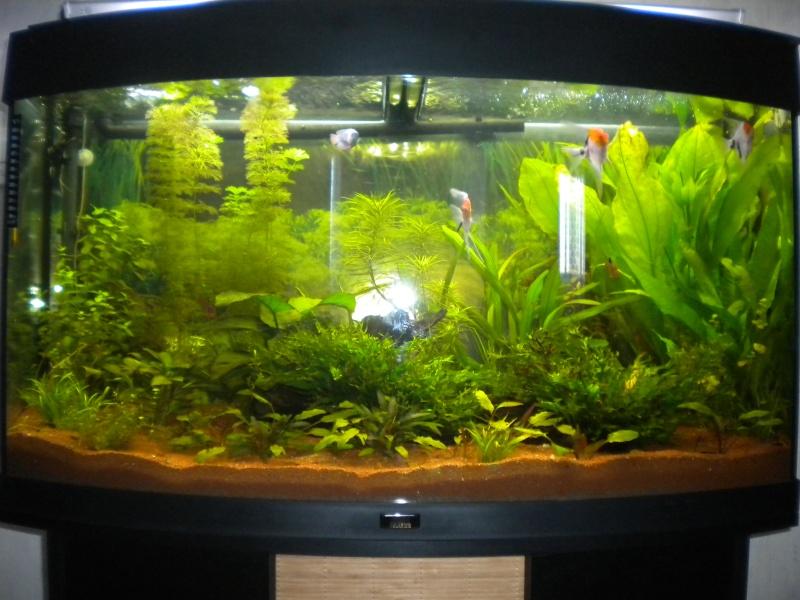 créer un forum : aquariophilie bouche du rhone - Portail Dscn1111