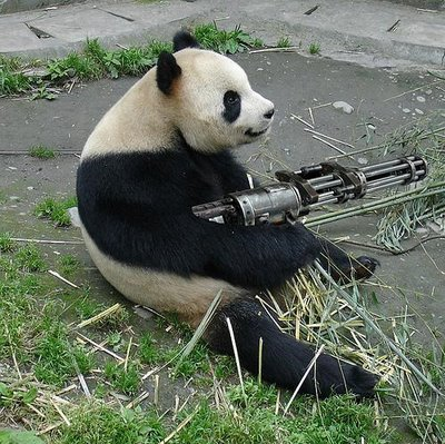 post your funnest animal picture Pandas10