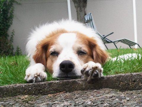 Vorstellung der Herzenshunde Foto0211