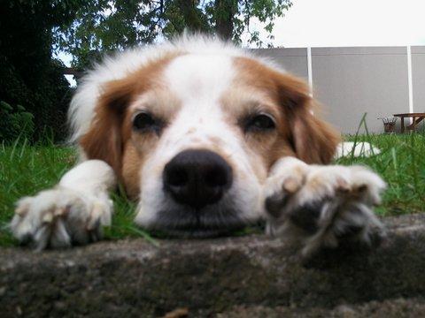 Vorstellung der Herzenshunde Foto0212
