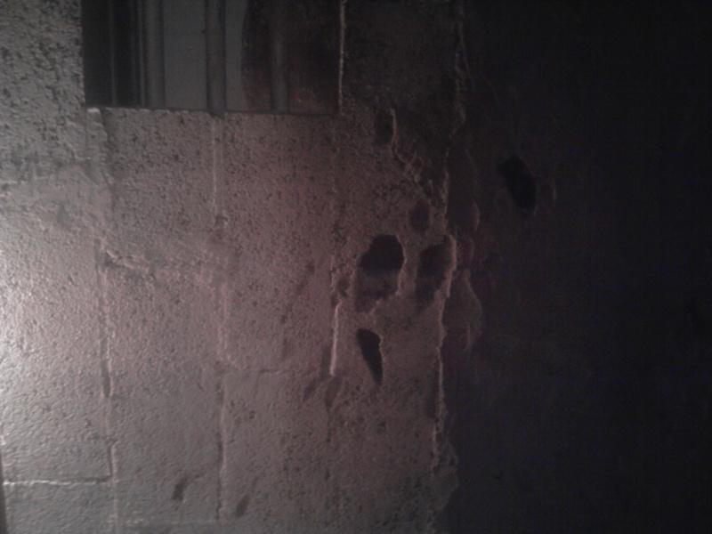 cheval qui tape les murs de son box Photo014