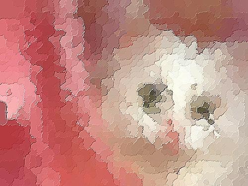 Devinettes sur des images Chat_b10