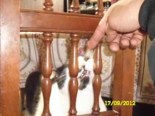 La lengua de mi gato. 24210
