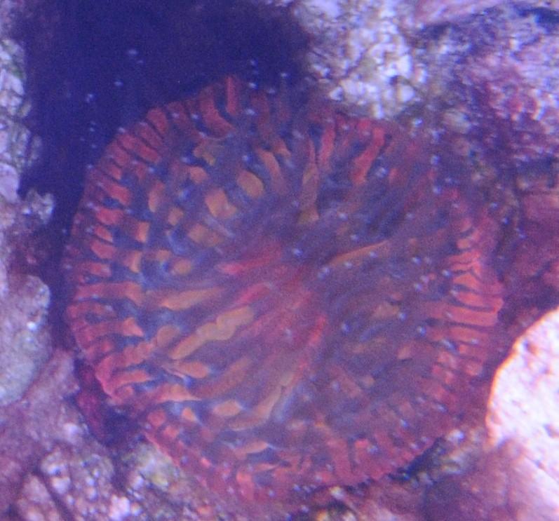 mine Dsc_2314