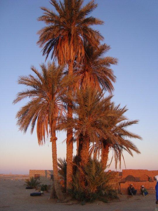 Photos de villes d'Algérie  - Page 2 37153_10