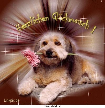 Glückwunsch Thete Hund10