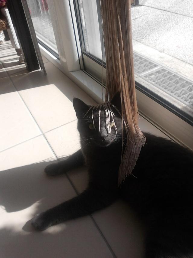 Harry le chat du voisin 2012-113