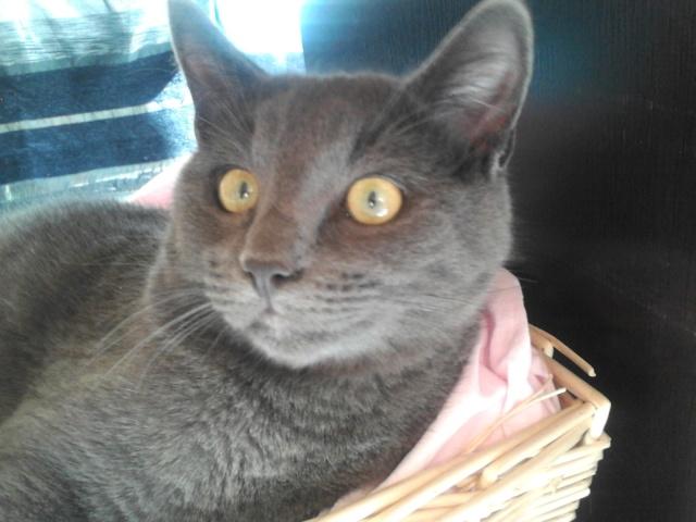 Harry le chat du voisin 2012-114