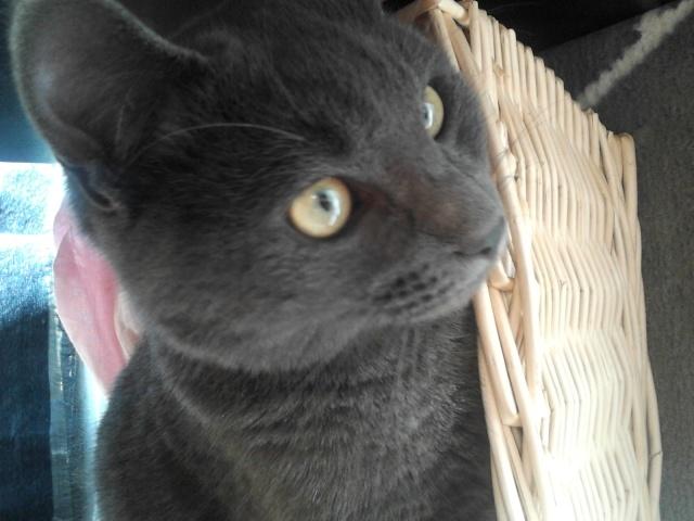 Harry le chat du voisin 2012-115