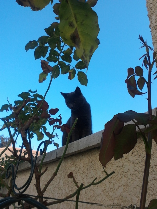 Harry le chat du voisin 2012-116