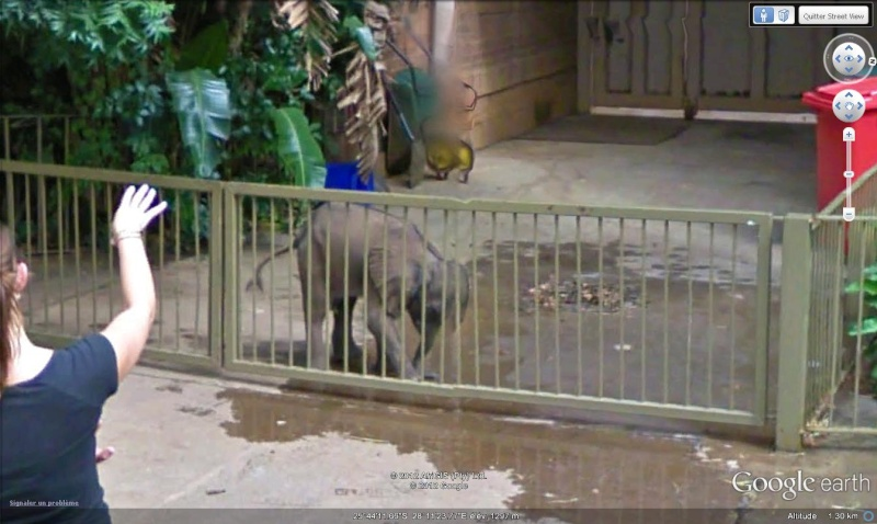 STREET VIEW : Les animaux - Page 7 Elef210