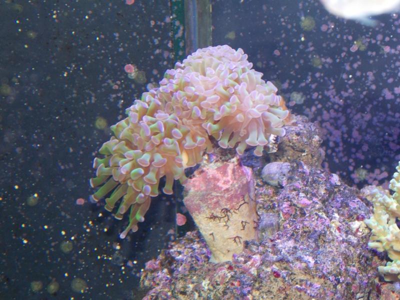 Démarrage d'un Aquamédic 288L  Dscn0514