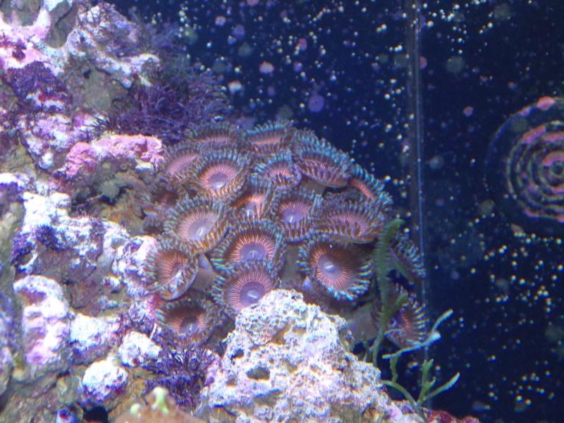 Démarrage d'un Aquamédic 288L  Dscn0517
