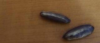 Découvrons les graines des plantes ! Deloni10