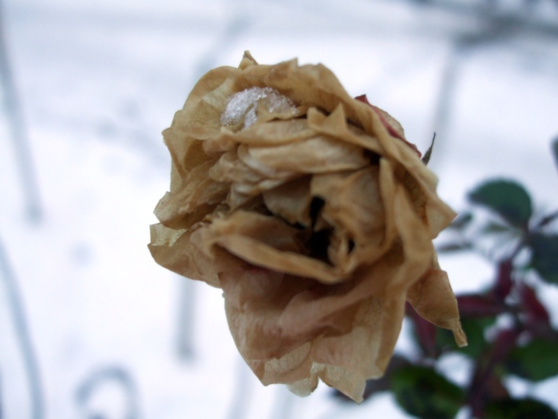 Floraisons de janvier Dscf0113