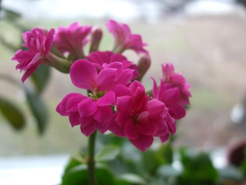 Floraisons de janvier - Page 3 Dscf0412