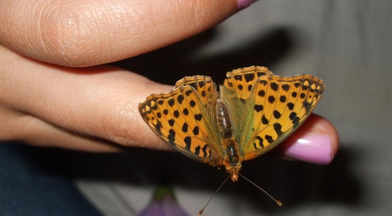 papillons Dscf3310