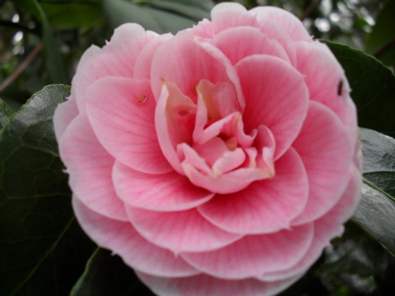 Floraisons de janvier - Page 3 00113