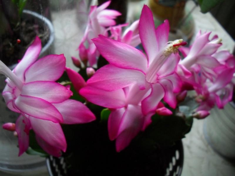 Floraisons de janvier 00511