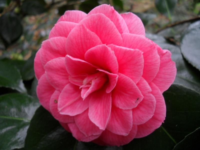 Floraisons de janvier - Page 3 00514