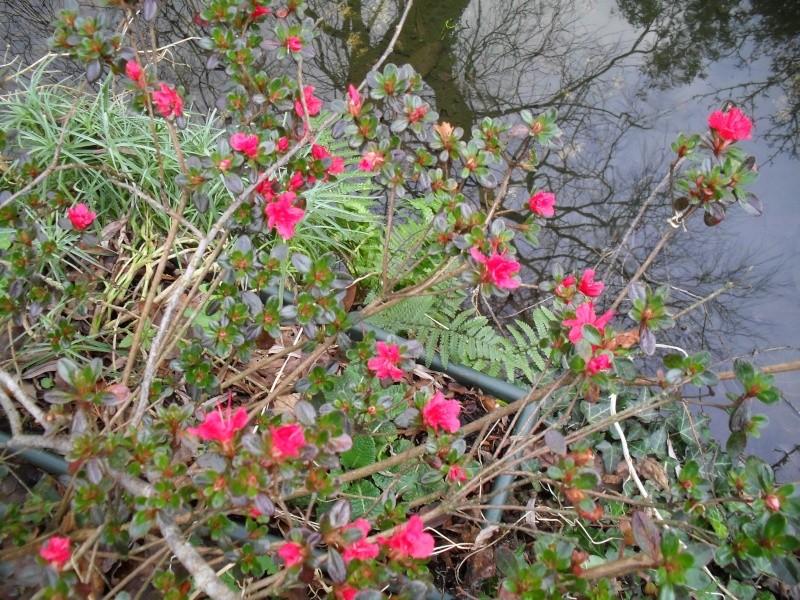 Floraisons de janvier - Page 2 00611